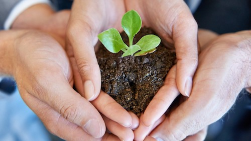A young plant being held by two business professionals
